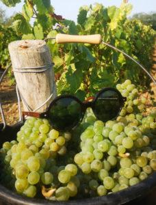 lunettes écologiques Friendly Frenchy faites en France en raisin